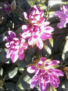 kwiaty-05