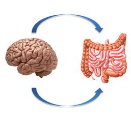 mozg-jelita